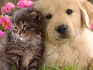 Come fare a togliere i peli di cani e gatti dai tessuti