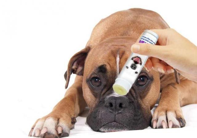 Come fare se il cane ha il naso infiammato