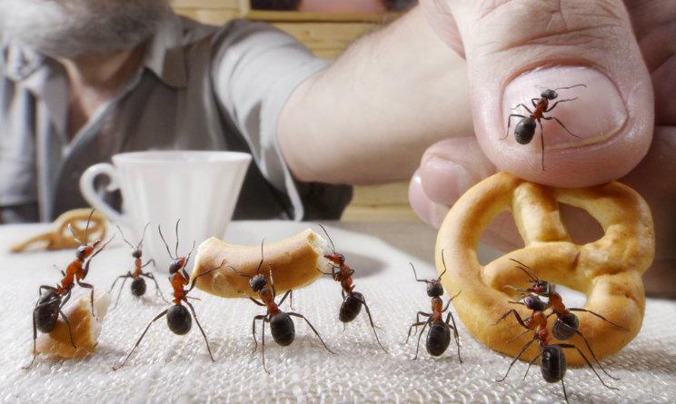 Come fare ad eliminare le formiche in casa 5 metodi - Le formiche in casa ...